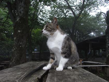 090723_cat1