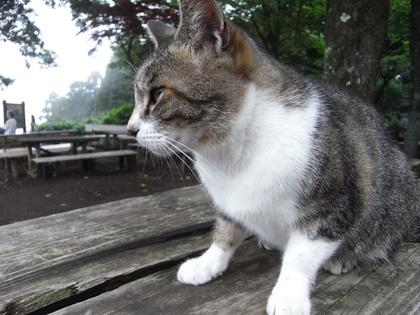 090723_cat2