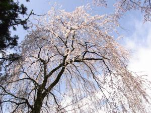 Nagano0410_05